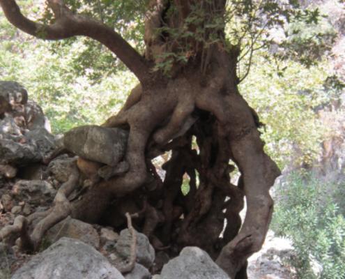 tree from stone